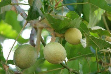 L'Huile végétale de kukui et Soins Naturels pour Cheveux | Aullyn Soins Naturels Cheveux Crépus à l'Huile de Noix de Coco et Beurre de Karité